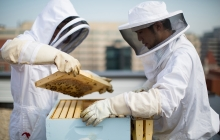 Undergraduate researchers study GW's bee hives on the roof of Lisner Hall