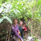 Michelle Stuhlmacher and team building transects in the Costa Rican rainforest